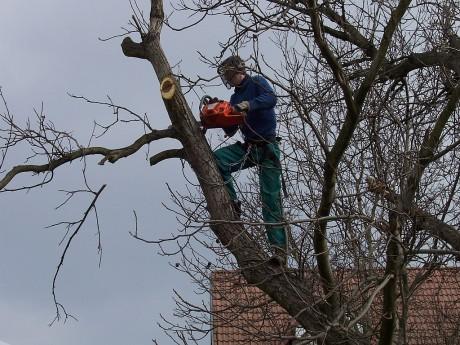 Kácení a prořez stromů